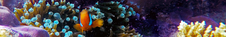 Find Nemo on Whitsunday Blue!
