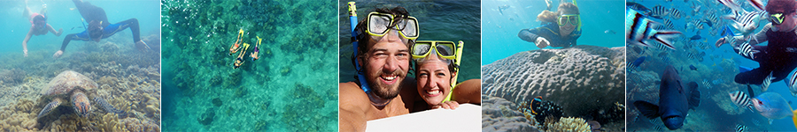 Snorkeling in the Whitsundays!