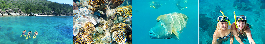 Snorkelling, Dumbbell island, Wrasse,