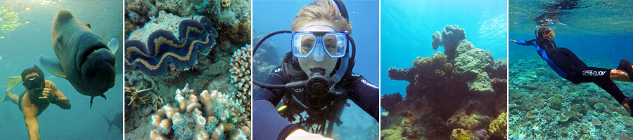 Snorkel and Dive on the Outer Great Barrier Reef