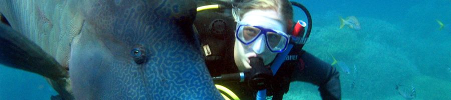 outer reef, diving, whitsundays
