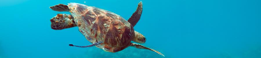 Summertime, Turtle