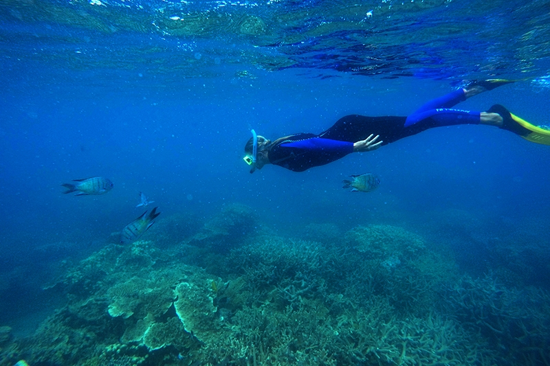 Snorkel and dive the Great Barrier Reef, Whitsundays