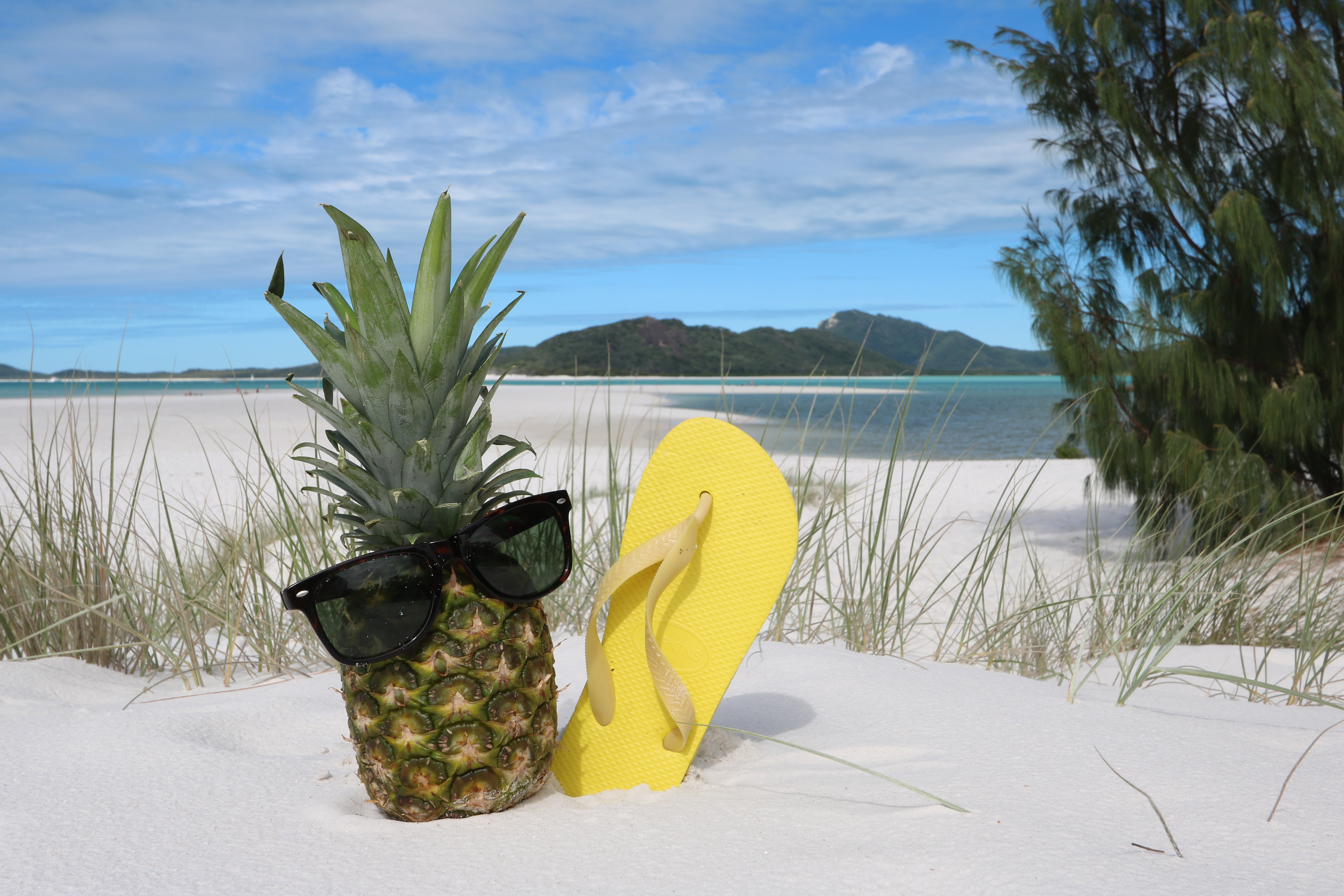 Summer in the Whitsundays, pineapple.