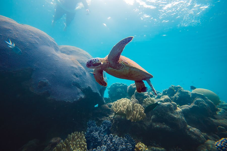 Turtle Swimming above the reef