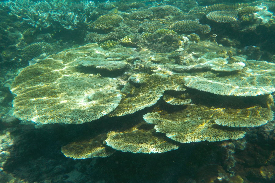 reef in the whitsundays