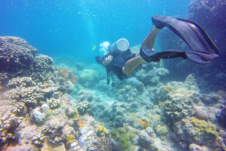 Diving in the Whitsundays