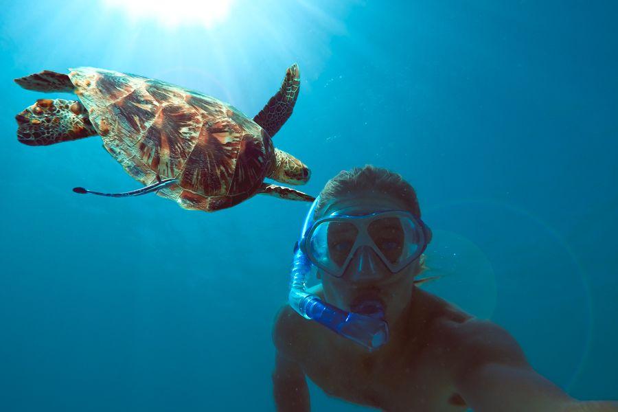 Things you'll see Snorkelling, Turtle Selfie
