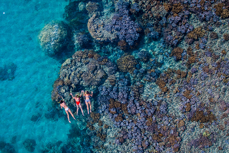 Fringing reef's whitsundays, snorkelling with the coral