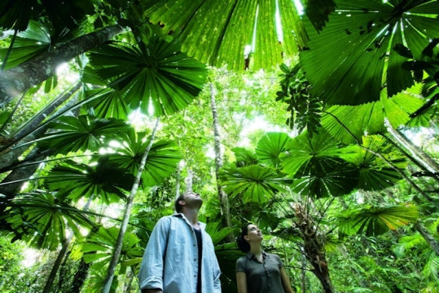 Things to do in Cairns - Cape Tribulation Rain Forest