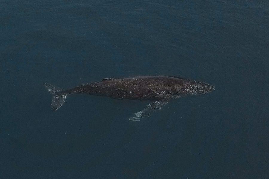fraser island, whales