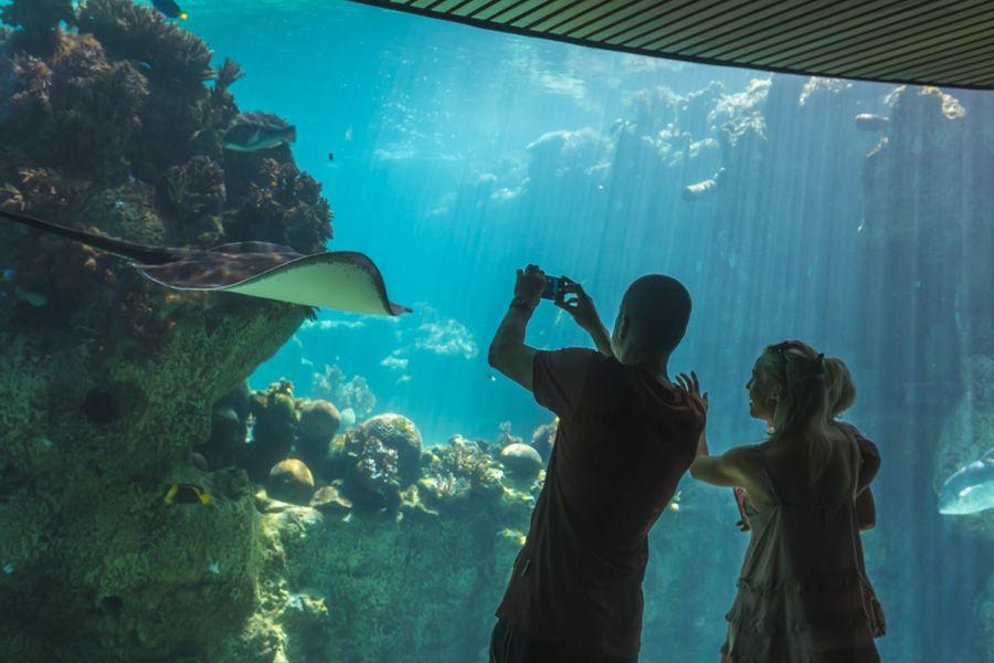 aquarium, daydream