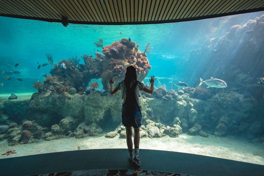 Daydream Island Living Reef