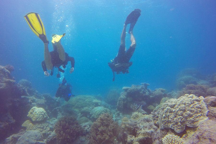 diving bait reef