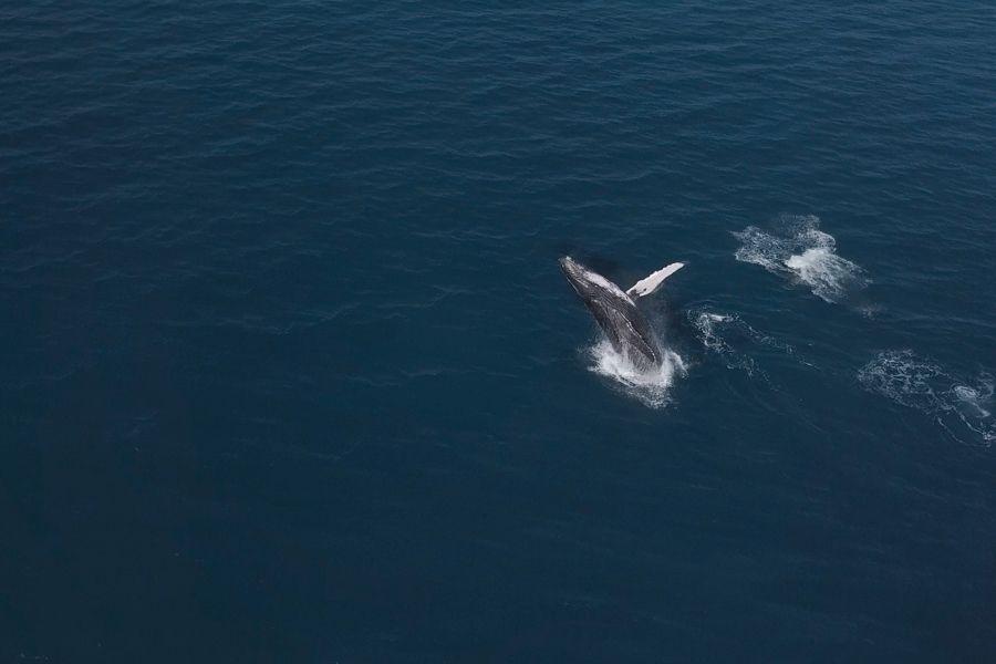 whales, whitsundays