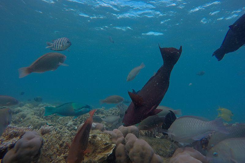 fish, whitsundays