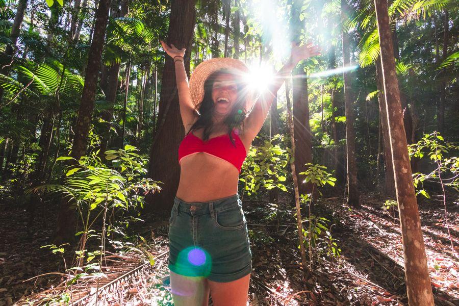 forest, gorge, rainforest