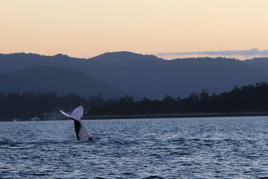 whales, hook passage