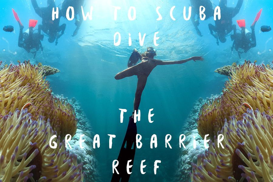 How to Scuba Dive The Reef