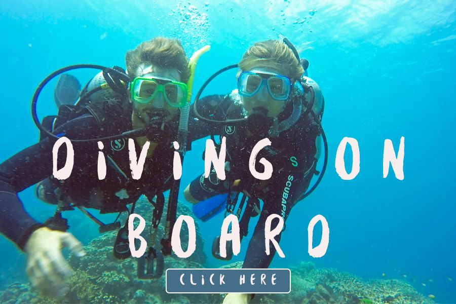 Diving on board Whitsundays