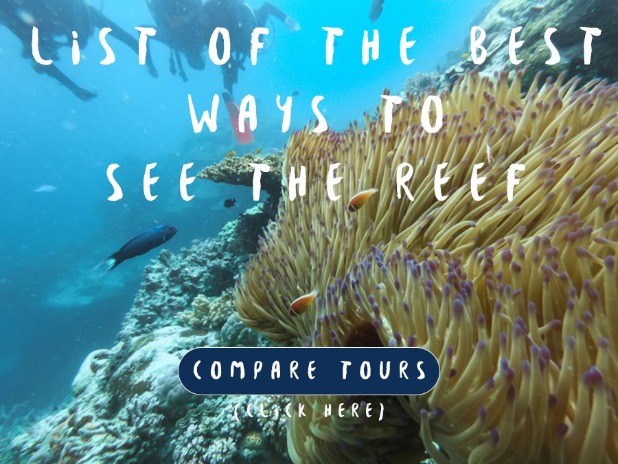 List of Best Ways To See The Reef