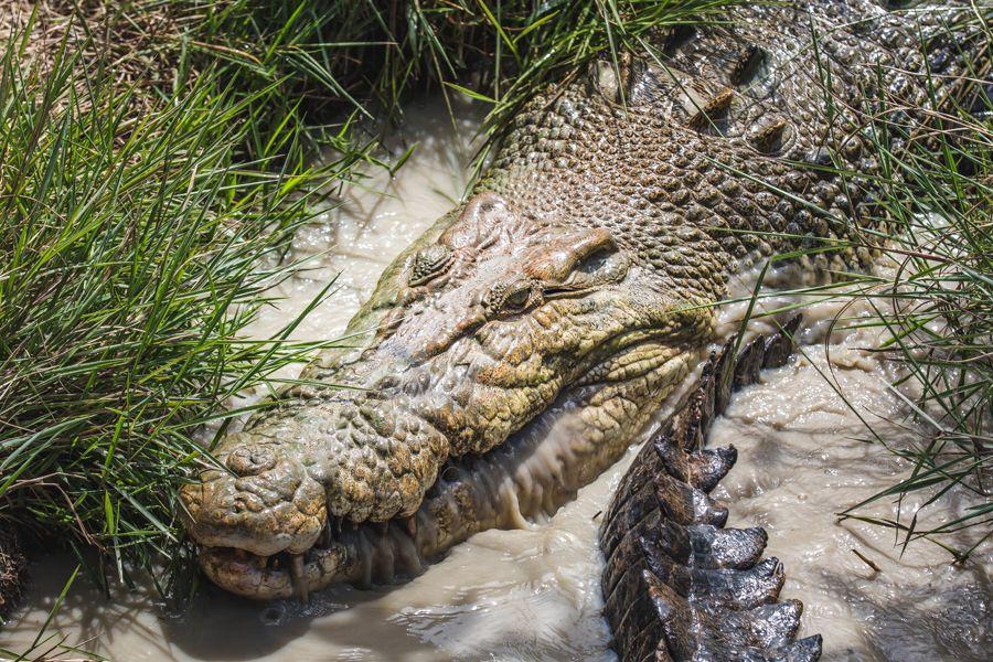 croc tour