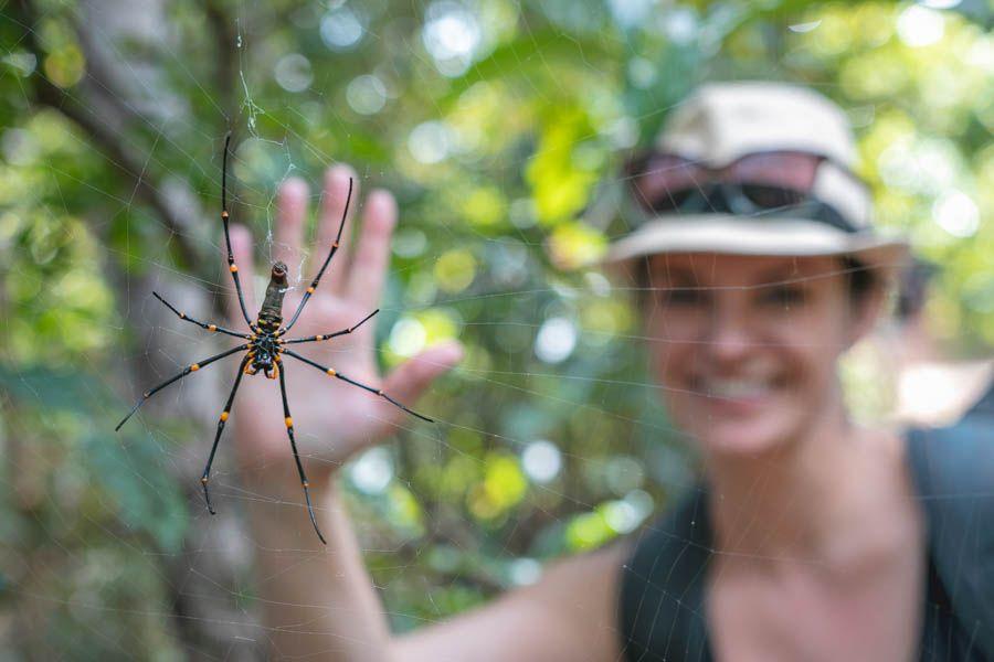 spider, whitsundays