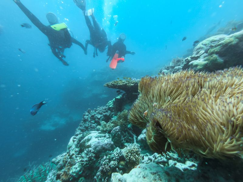 Diving in the Whitsunday Islands, Hardy reef
