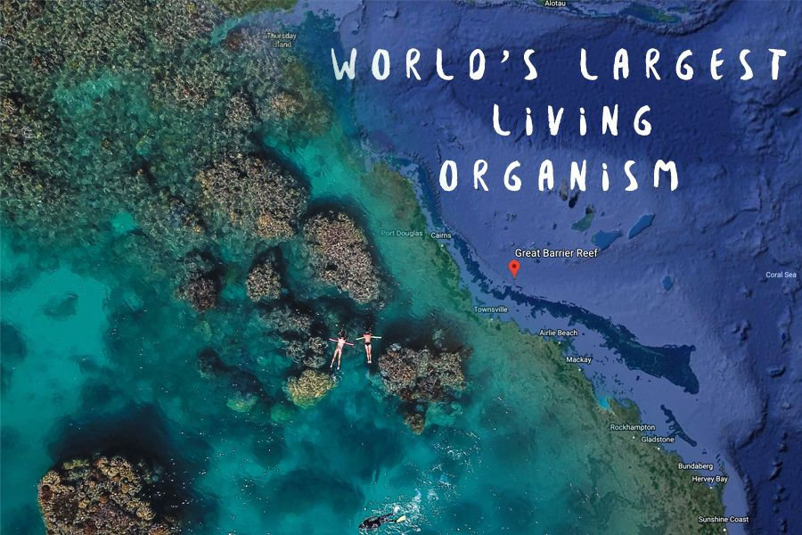 World's largest Living ORganism