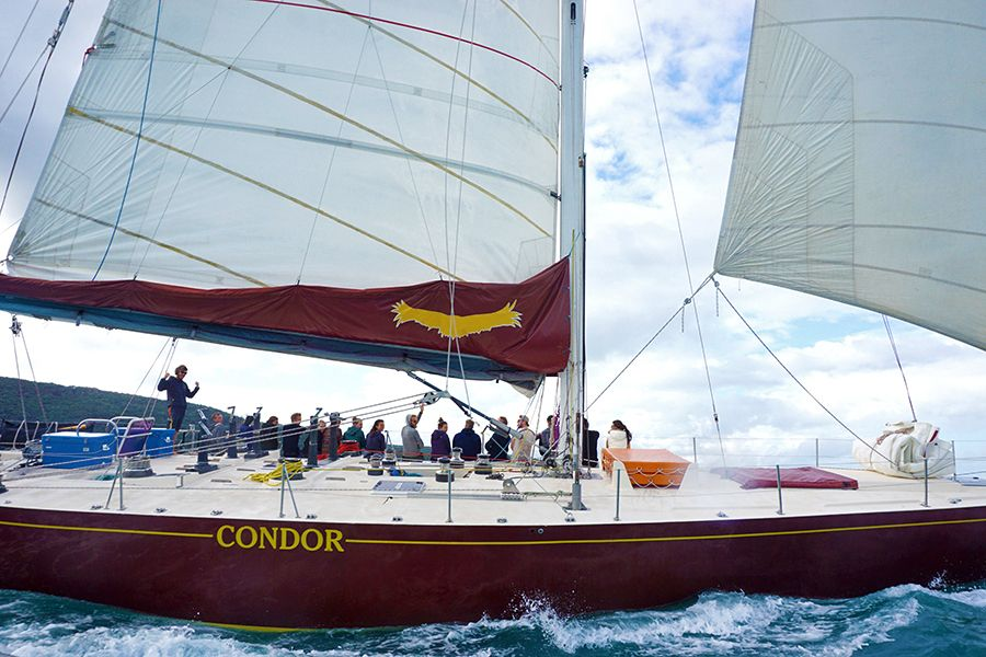 10 Reasons to Book Condor Maxi Yacht in the Whitsundays