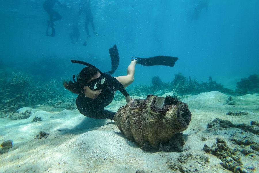 Underwater Whitsundays
