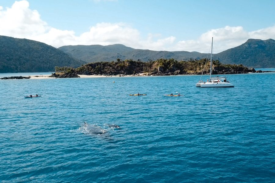 See whales in whitsundays