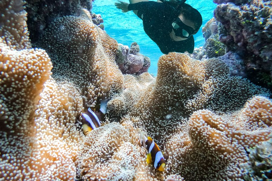 Finding Nemo Whitsundays