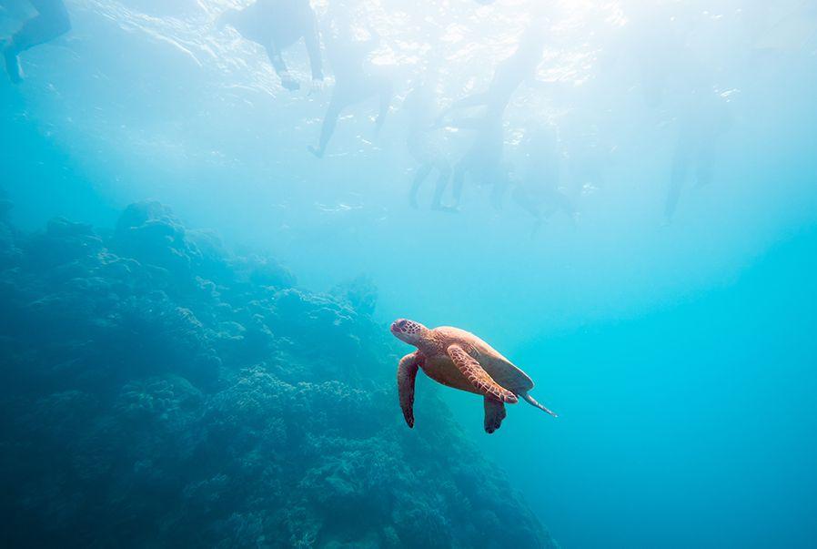 Underwater Winter Visibility Whitsundays