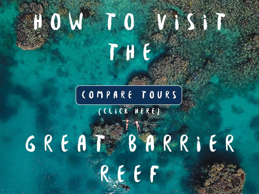 How to see the reef