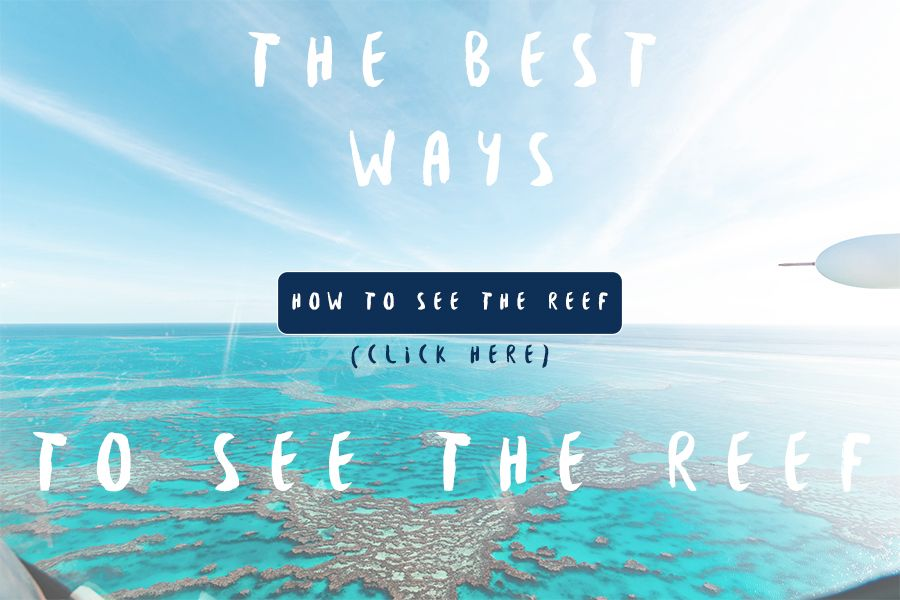 Ways to see the reef