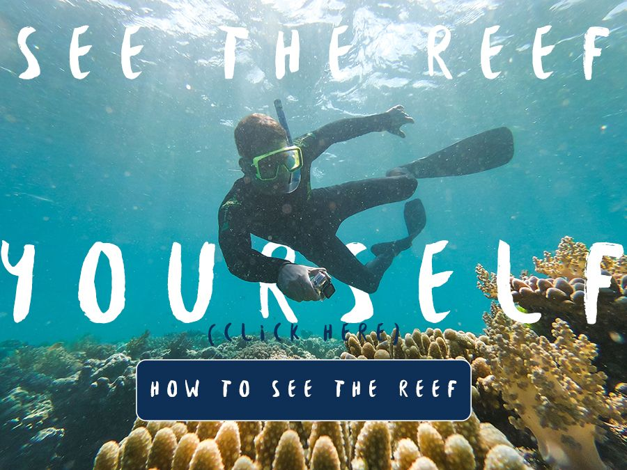 See the Reef Yourself