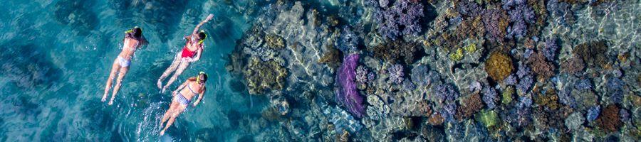 Snorkelling in the Whitsundays, Manta Ray Bay, Whitsunday Island