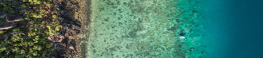 Reef, Whitsunday Islands