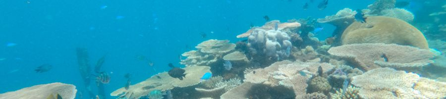 coral reef, cairns