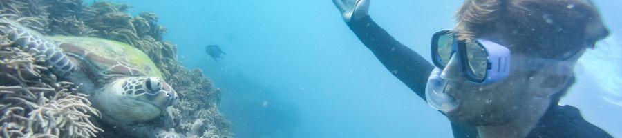snorkel, cairns