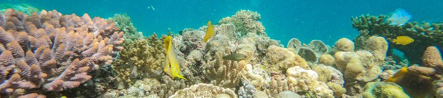 coral reef, whitsundays