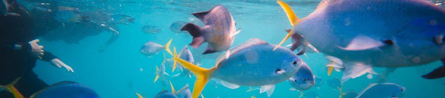 snorkelling, whitsunday islands