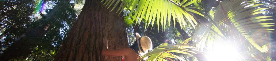 Forest on Fraser Island