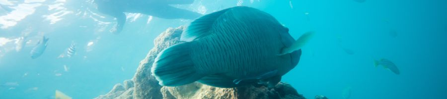 snorkelling, whitsunday bliss