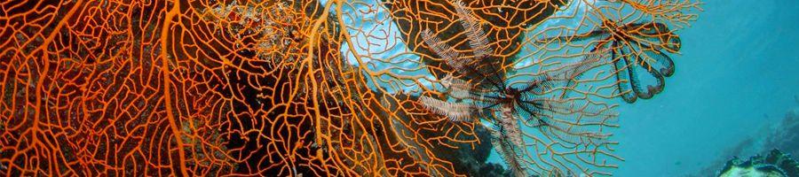 Snorkel Blue Whitsundays