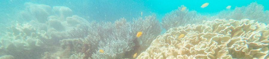 Snorkel Whitsunday Getaway