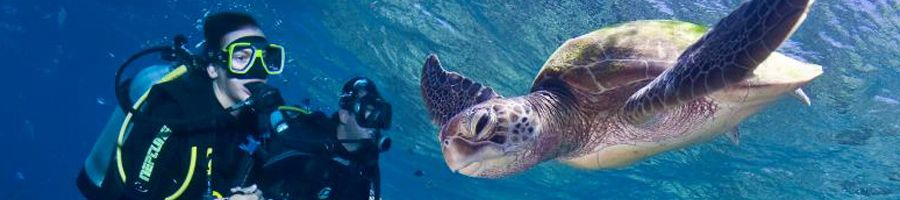 Scuba diving with turtles Whitsundays