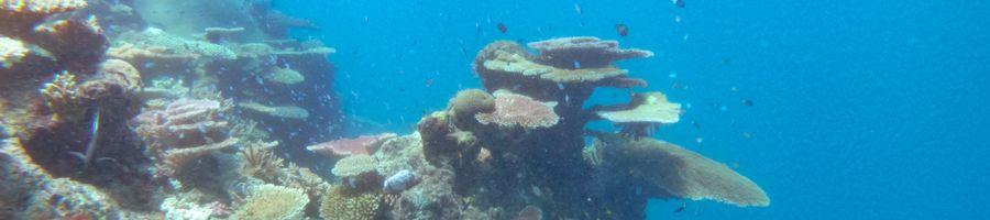 snorkelling, great barrier reef