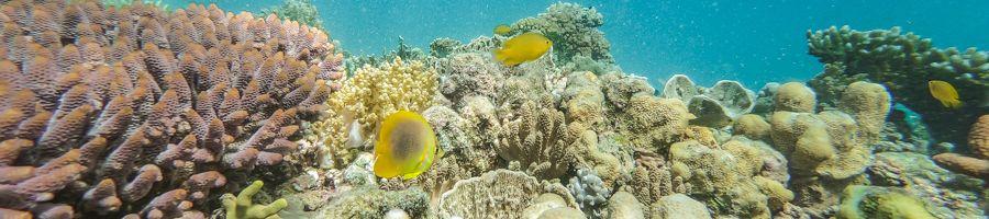 coral reef, great barrier reef